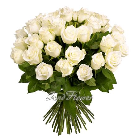 Букет белых роз (50 см) перевязанный лентой